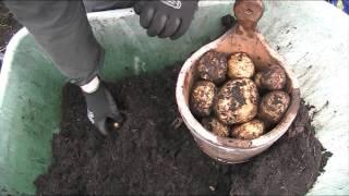 Potato Reveal 16, 2015-16, Cara