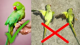 Best Medicine For Birds For All Problems