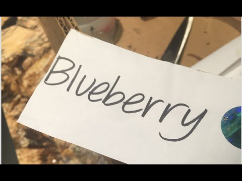Tangiers Tobacco: Blueberry Review