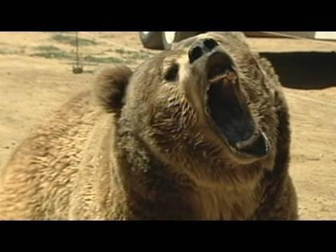 911: Deadly Bear Attack