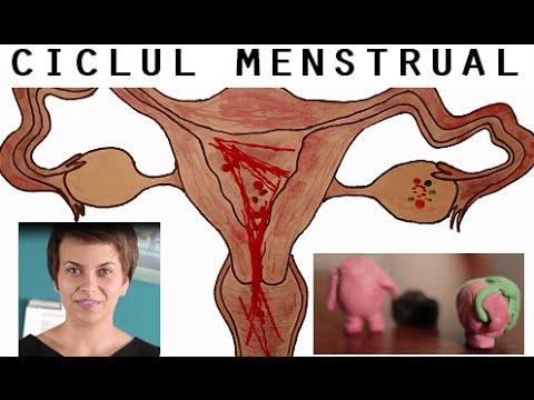 Ce sunt de fapt menstruațiile?