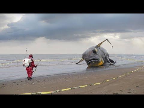 НЕВЕРОЯТНЫЕ предметы найденные после цунами