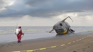НЕВЕРОЯТНЫЕ предметы, найденные после цунами!