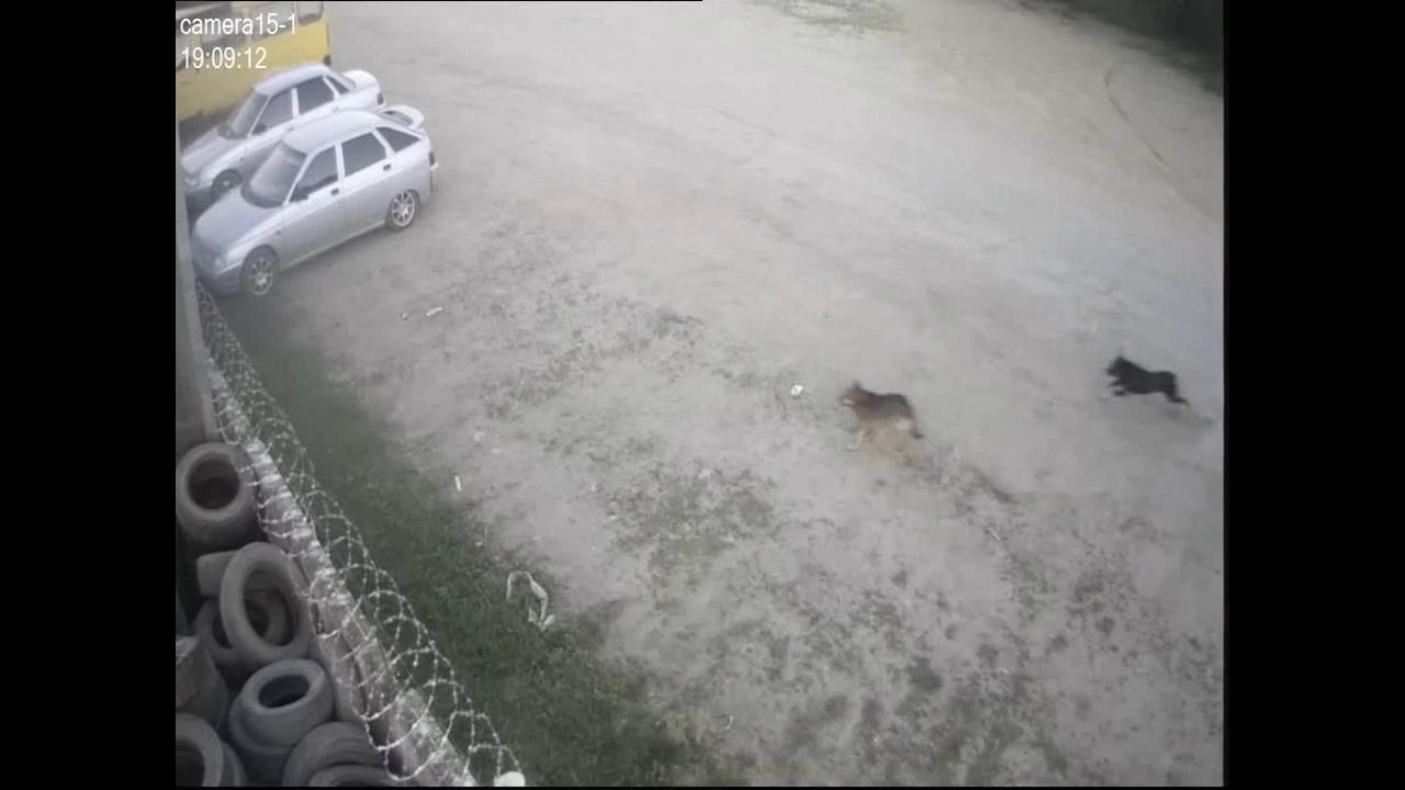Собака скрылась с места ДТП