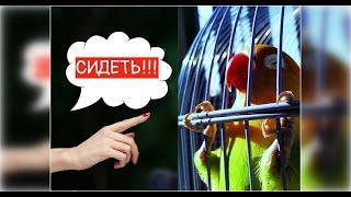 Попугай выполняет  КОМАНДЫ