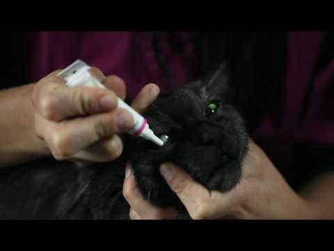 How To Apply Ointment To Your Pet's Eyes (Vétoquinol Canada)