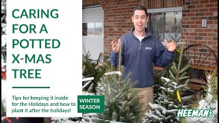 Caring for a Potted Live Christmas Tree