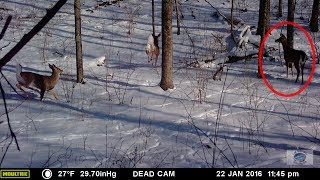 POACHERS ON MY LAND.  Here's what the game cam caught.