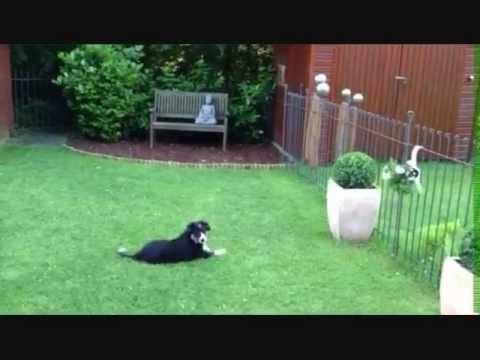 Gartenzaun mit Hund Steckzaun, Hundezaun