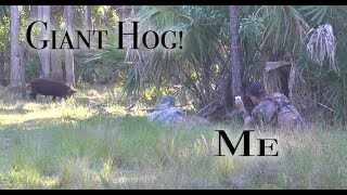 Incredible Wild Hog Hunt With Excalibur Crossbow! Plus Pond Feeding And Decoration