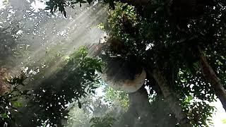 Lấy ông rừng cồn An Lộc
