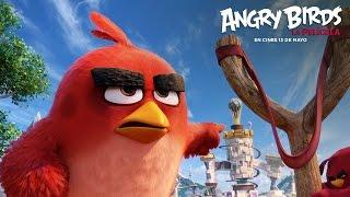 ANGRY BIRDS LA PELÍCULA. ¡Chupaos ésta, puercos!. Ya en cines.