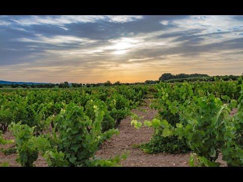 Vinya Alforí, un vino con alma que llega desde Fontanars dels Alforins