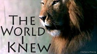 African Cats .:The World I Knew:.