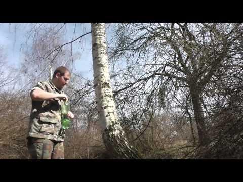 Jak ošetřit strom po čerpání mízy