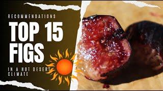 Top 15 Fig Varieties In 2019 - AZ 9B