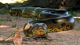 La Anaconda Verde, la Reina del Amazonas