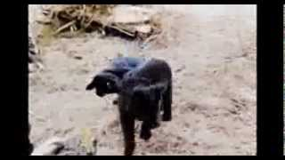Cute puppies playing (+ Doro Pesch - Always Live to Win)