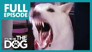 Monster German Shepherd: Ben   Full Episode   It's Me or the Dog
