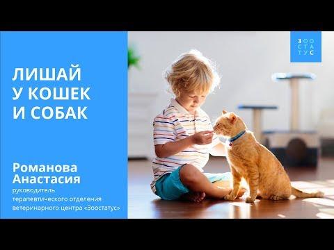 Лишай у кошек (лишай у собак). Симптомы и лечение.
