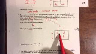 Monohybrid Practice Problems 4-5