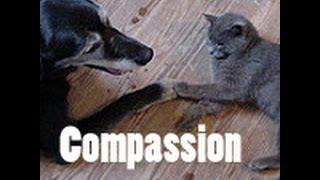 Willard -- a Columbus Small Animal Hospital story