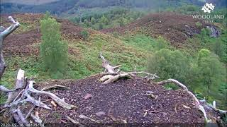 Another invasion of songbirds on the empty Loch Arkaig Osprey nest 16 Sep 2020