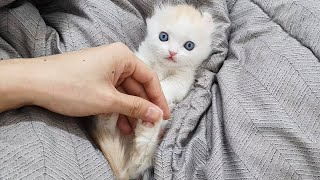 Which Part of the Kitten can I touch?│Cat Physical Touch Test