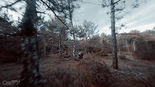 Forest   FPV Drone
