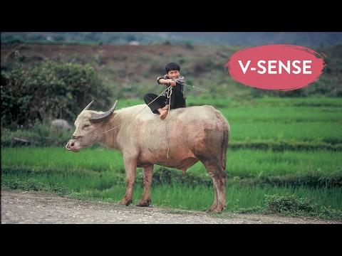 Vietnamese Award-Winning Movie - Buffalo Boy | English Subtitles