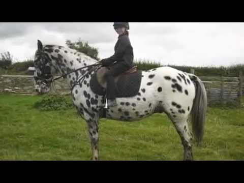 Alfie Moon - Appaloosa 15.1 All Rounder. Mp3