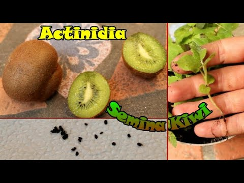 Rimedi popolari e trattamento adenoma prostatico