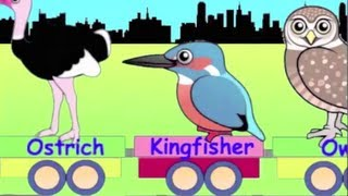 Learn Bird Train - learning for kids