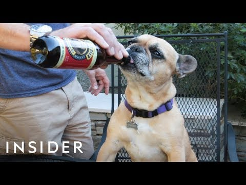 Beer for Your Dog