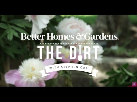 All About Peonies | The Dirt | Better Homes & Gardens