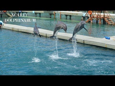 Dolphinarium at Xcaret Park