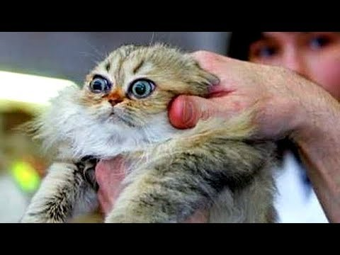 You'll NEVER STOP LAUGHING after THIS - Awesome CATS, DOGS and other ANIMALS COMPILATION