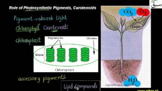 CH06-PHOTOSYNTHESIS-PART03-PHOTOSYNTHETIC PIGMENTS