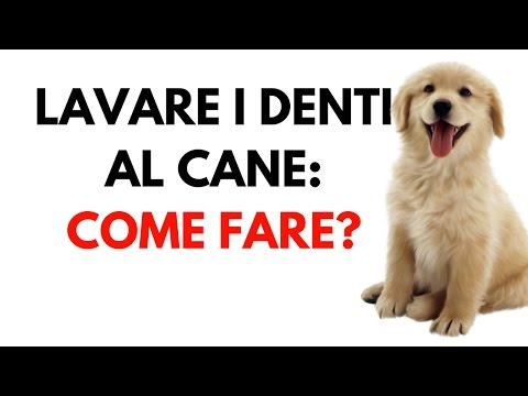 Lavare i denti al cane: come fare e cosa serve per lavare i denti
