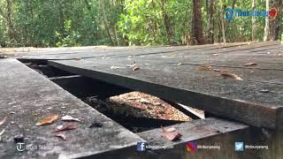 Wisatawan Keluhkan Fasilitas di Hutan Mangrove Karimunjawa