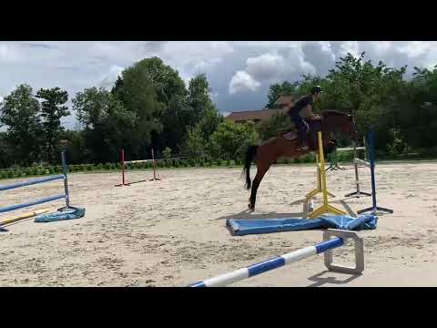 Super cheval d'avenir