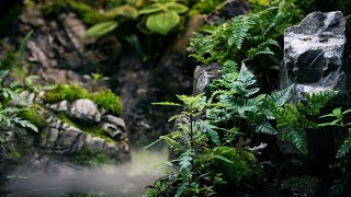Rainforest Paludarium - inspiracja Green Aqua