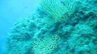preview picture of video 'Isola del Giglio Diving'