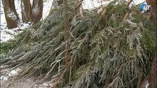 Нераспроданные елки станут украшением и ориентиром для верующих в крещенскую ночь