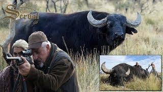 Water buffalo - Hunting in Argentina, La Pampa 2018.- Búfalo de agua- Caza en Argentina