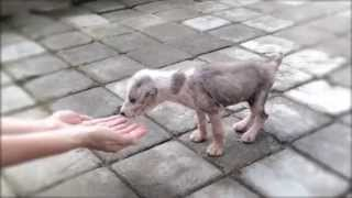 Bali Puppy Rescue - Teeny Evie by Mission Paws'ible