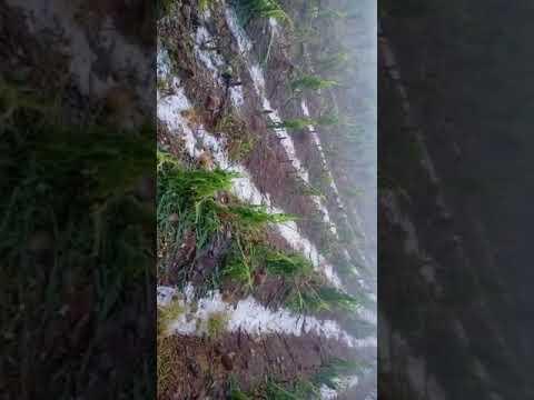 Granizo de mais de um palmo causa destruição em Boqueirão do Leão