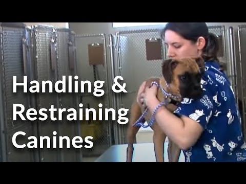 Veterinary Technician and Assistant Training: Handling and ...