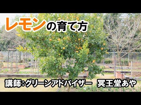 , title : 'レモンの育て方 講師ー冥王堂あや(グリーンアドバイザー)