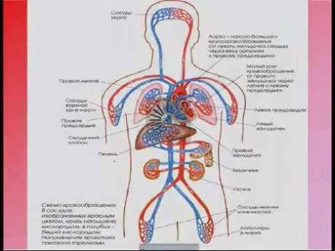 Асд 2 лечит гипертонию